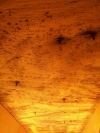 Mold Problems Company Bridgewater MA | JH Cleaning - john_work_website_094