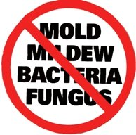 Residential Mold Removal Contractors Carver MA | JH Cleaning - no_mold_copy